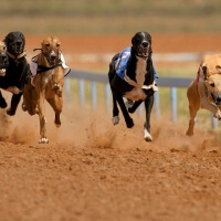Hen Greyhound Racing