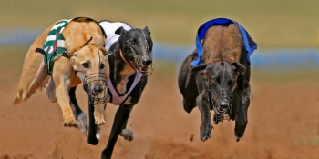 Nottingham Stag Activities Greyhound Racing