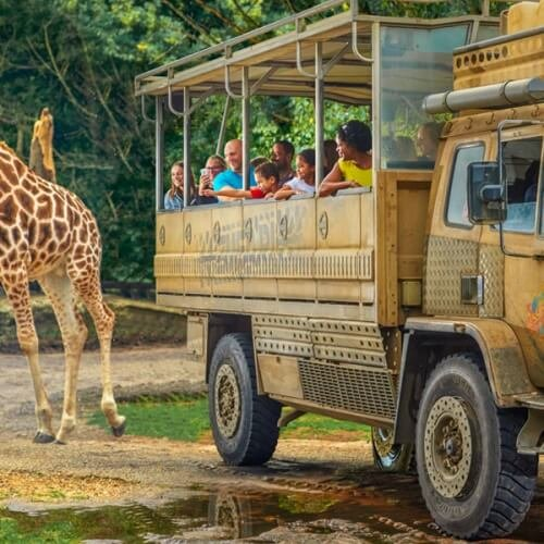 Party Chessington Zoo Activities
